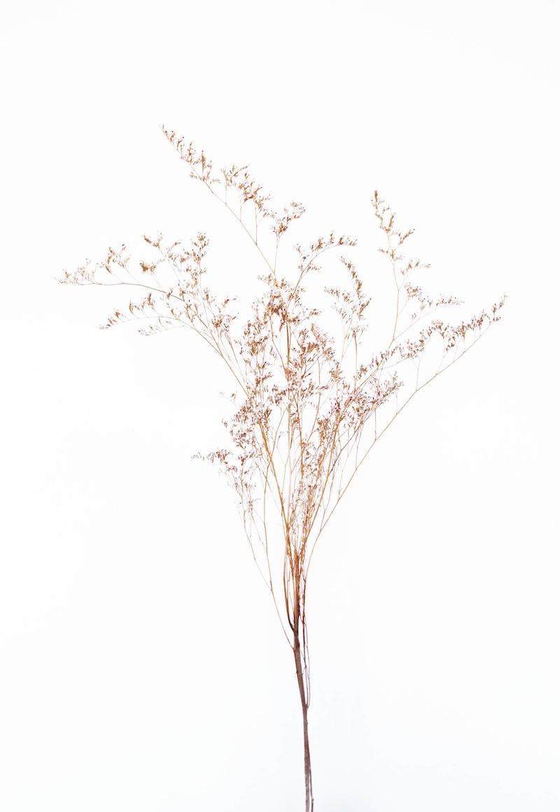 camillemarguet-fleur3.jpg