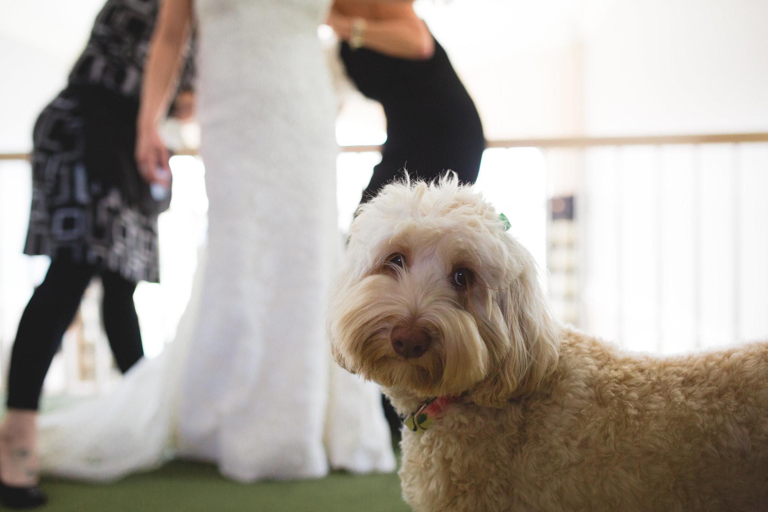 Adore Wedding Photography-20368.jpg