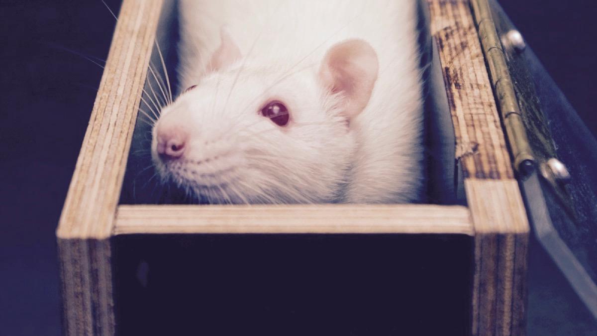 Rat_Box