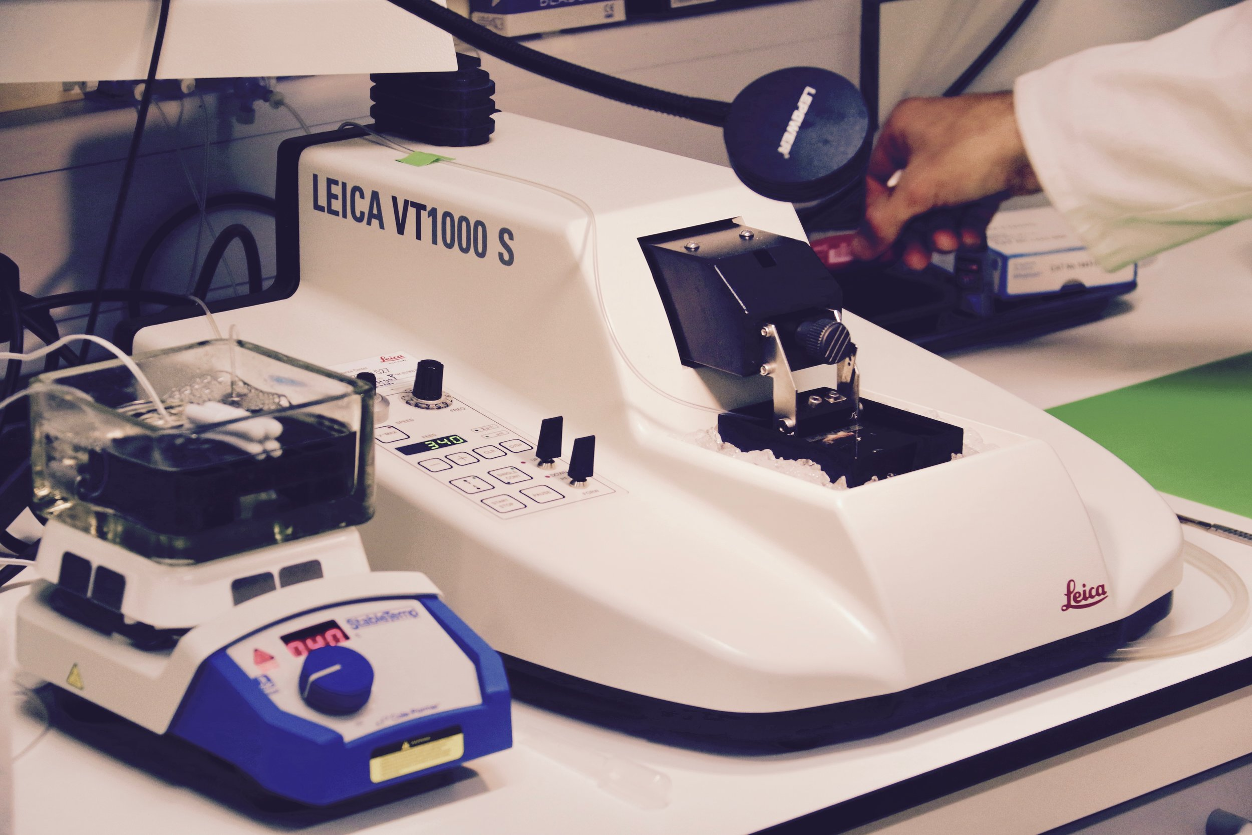 Brain slices for electrophysiological recordings are cut using a vibrating blade microtome.