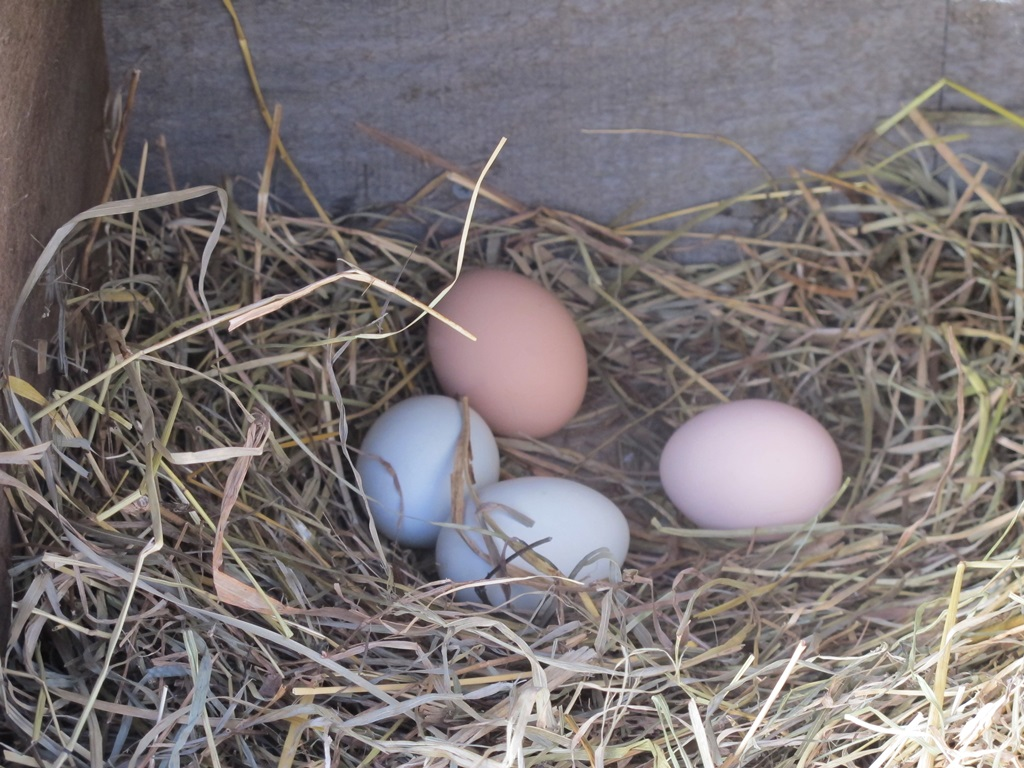 eggs_nestbox.jpg