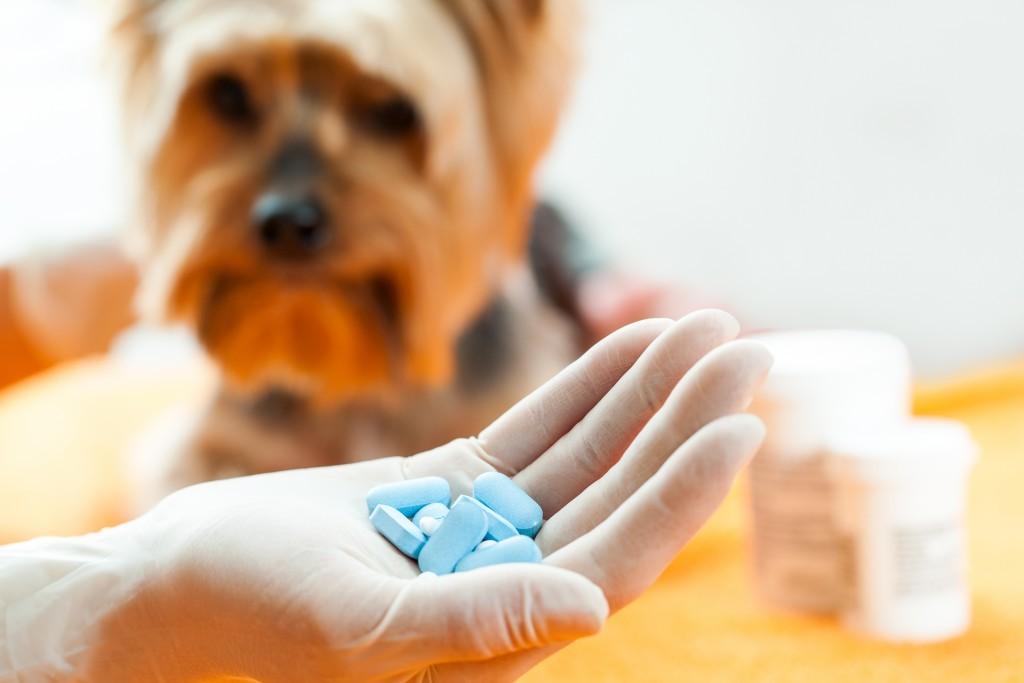 cascade-custom-pharmacy-compounded-ped-meds-2-1024x683.jpg