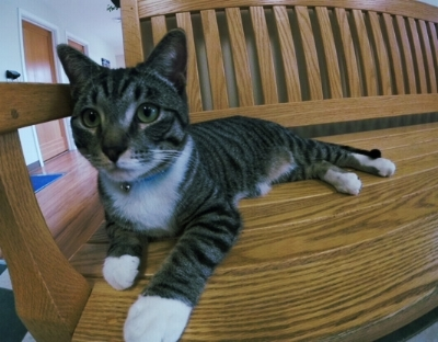 Me lookin' handsome on the bench, waiting for my kitty friends to visit!