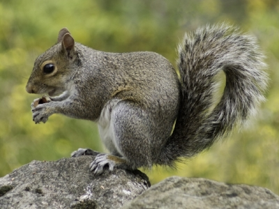 squirrel-498139_960_720.jpg