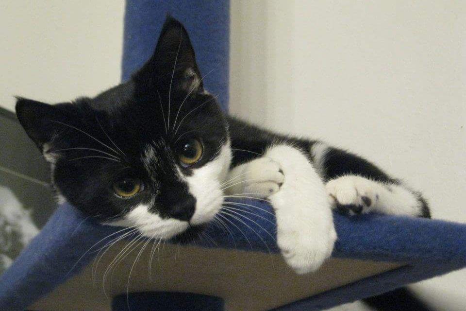 Mumford enjoying his cat tree as a wee kitten.