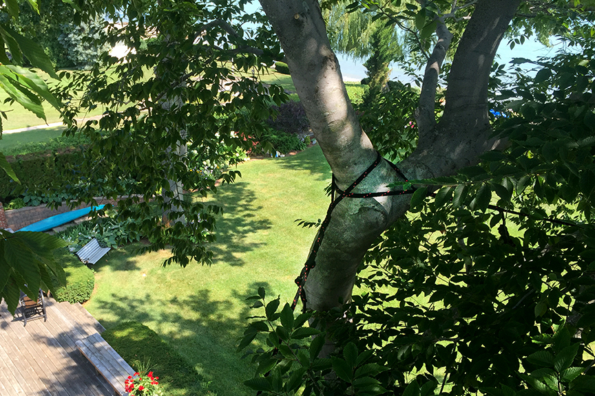 tree cabling and preservation in port huron michigan