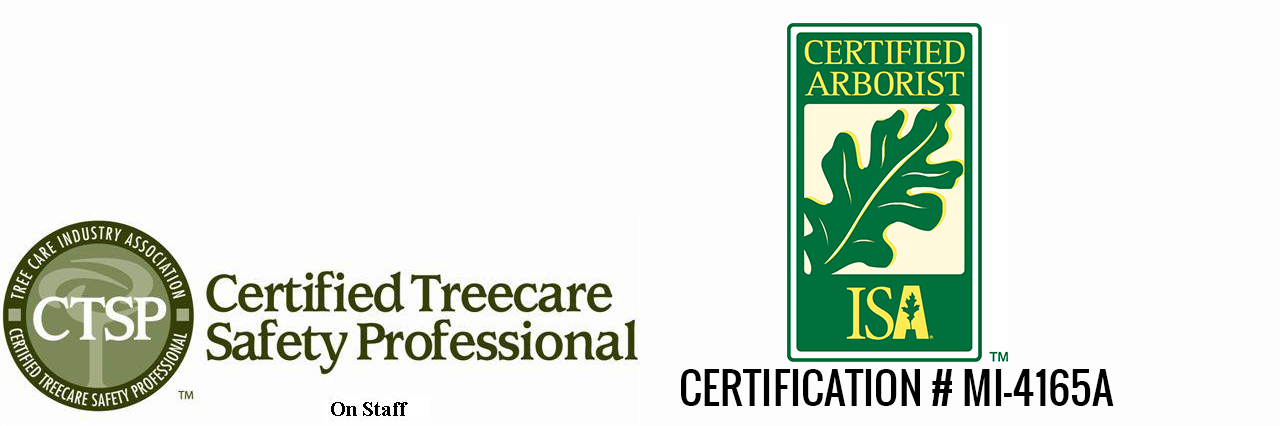 Why Is It Important To Hire A Certified Arborist Canopy