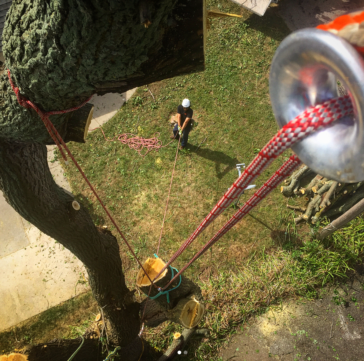 Tree Service and Removal for Port Huron Michigan