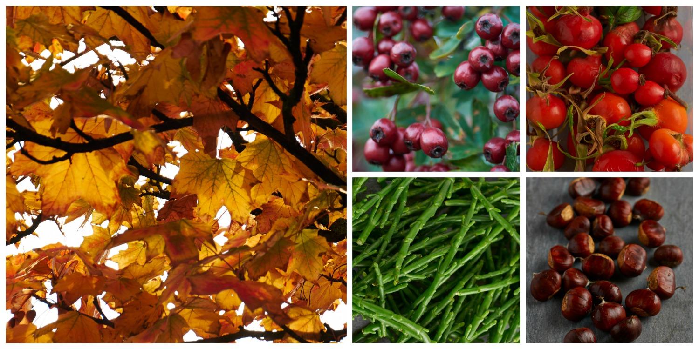 Autumn graphic.jpg