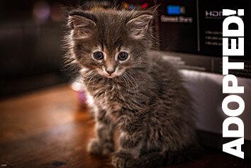 Belle Adopted.jpg