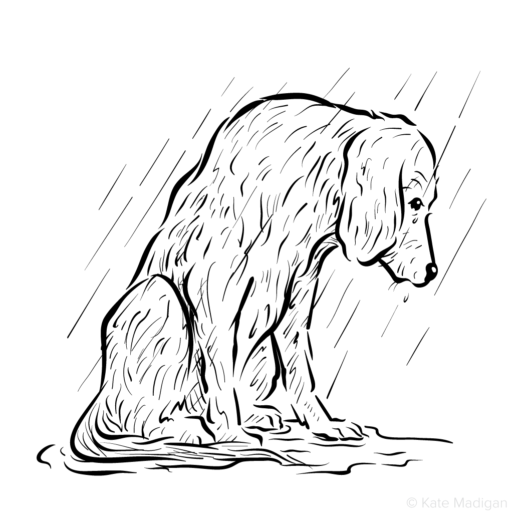 Black and white drawing of a sad mongrel dog (a lurcher?) left out in the rain and sitting in a puddle.   Copyright Kate Madigan.