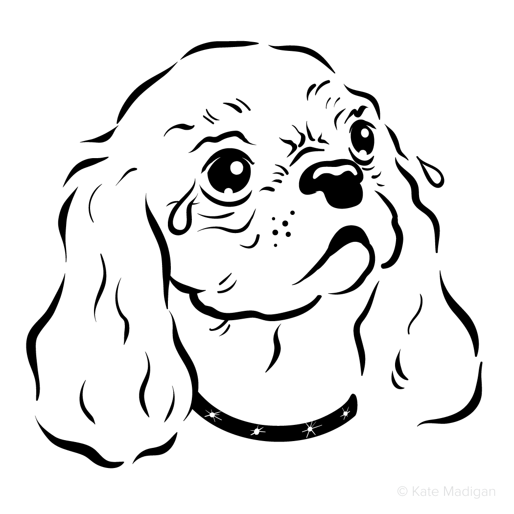 Black and white drawing of a furious little King Charles Spaniel in a diamante collar weeping tears of frustration  . Copyright Kate Madigan.