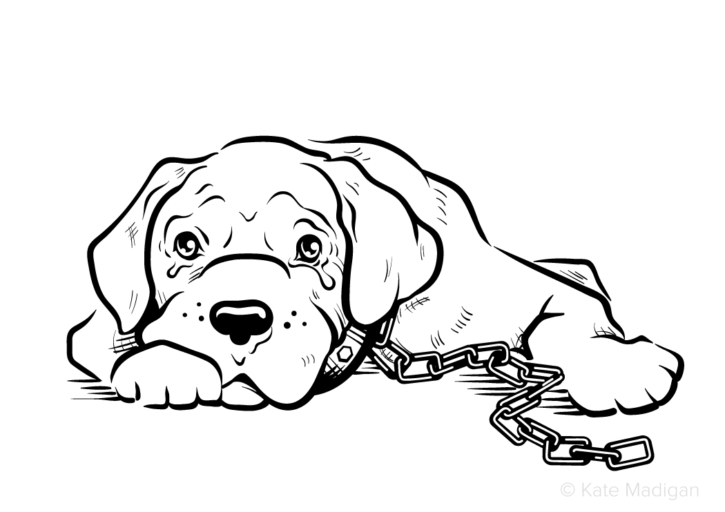 Black and white line drawing of a sad, miserable, tearful boxer/mastiff dog with a heavy chain attached to his collar.   Copyright Kate Madigan.