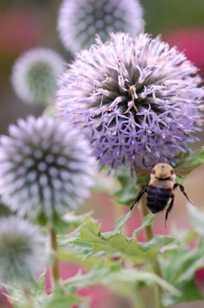 BEE BALL - PHOTO