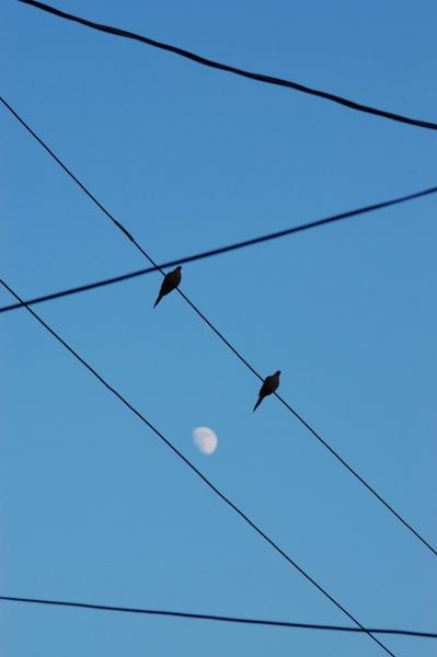 LUNAR LOVE LINES - PHOTO