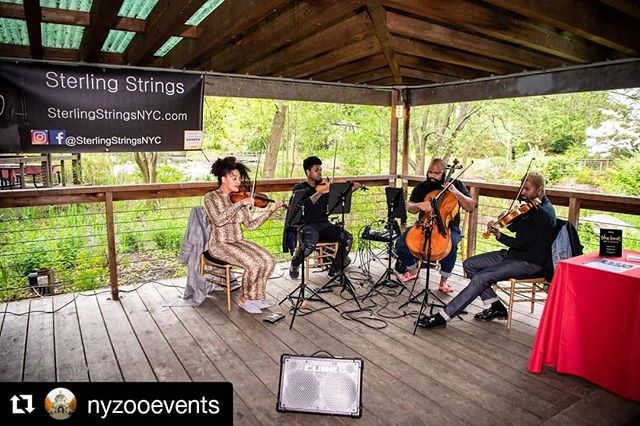 #tbt of our performance at the #bronxzoo earlier this year. We had a great time performing for @nyzooevents for their event planner hooky day at the zoo.  If you're looking for a unique and fun place to have an event, check out @nyzooevents. A not so commonly know fact, is that most (if not all) of the zoo's and the aquarium in NY are owned and run by @thewcs. Most of the spaces also double as event spaces. So why not have a party and help save the environment at the same time? While you're at it have #SterlingStrings keep the party bumpin 😉😎 #Repost @nyzooevents ・・・ #tbt to the Sterling Strings performing at our first Event Planners Day Out Event at the Bronx Zoo! #nyzooevents #barbecueseason #bbq #firsttuesdayofmayplayhooky #bronxzooevents #uniqueevents #specialevents #corporateplanners #socialevents #nyc #bronxny #wcs #wildlifeconservationsociety #partyanimal #weddings #mitzvahs #bronxzoo #bzevents #newyork #nycevents #sterlingstrings #vendorshoutout