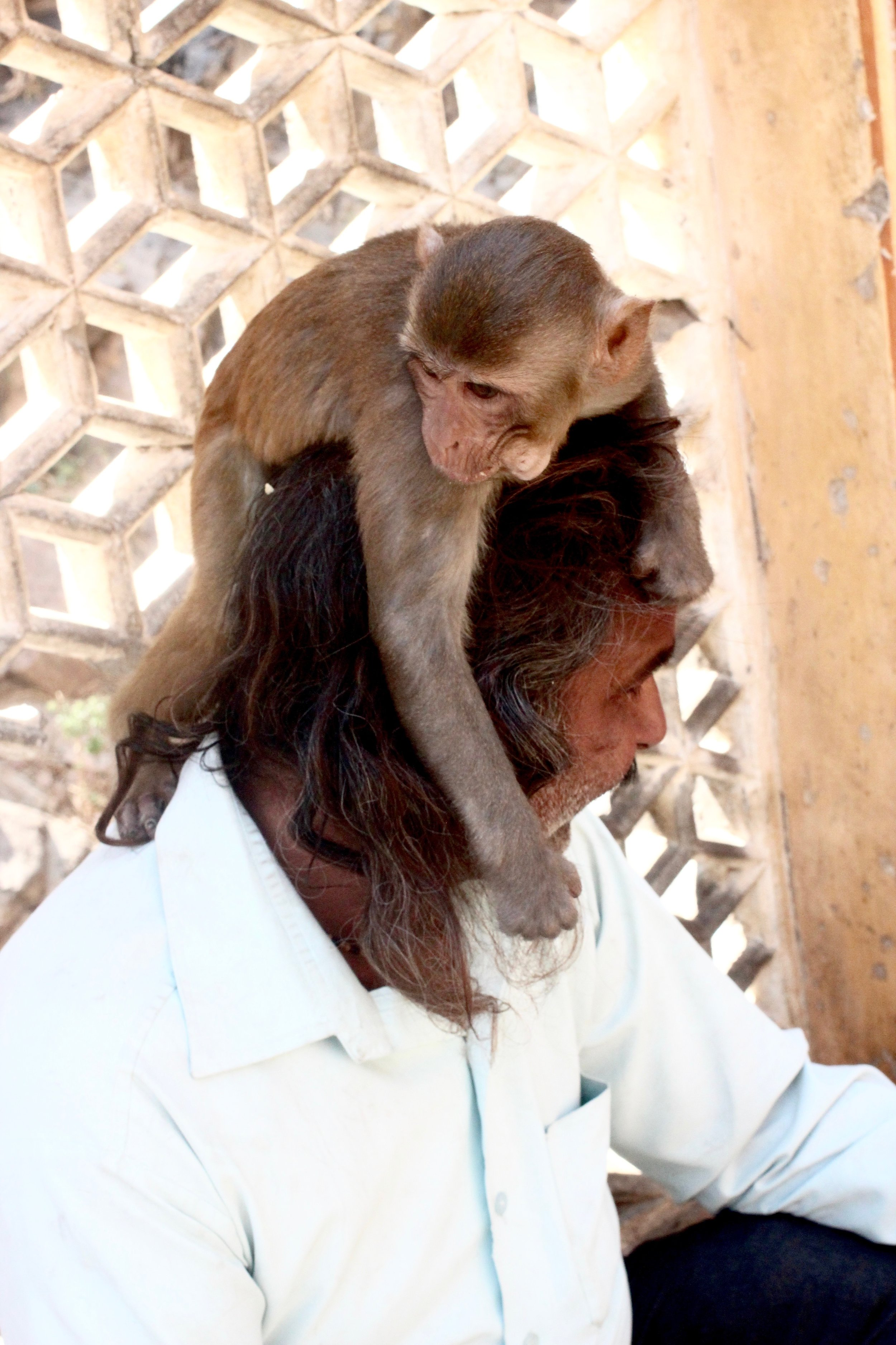 Meet the Monkey Man --he's been featured on Nat Geo and BBC for his work at the Monkey Temple.