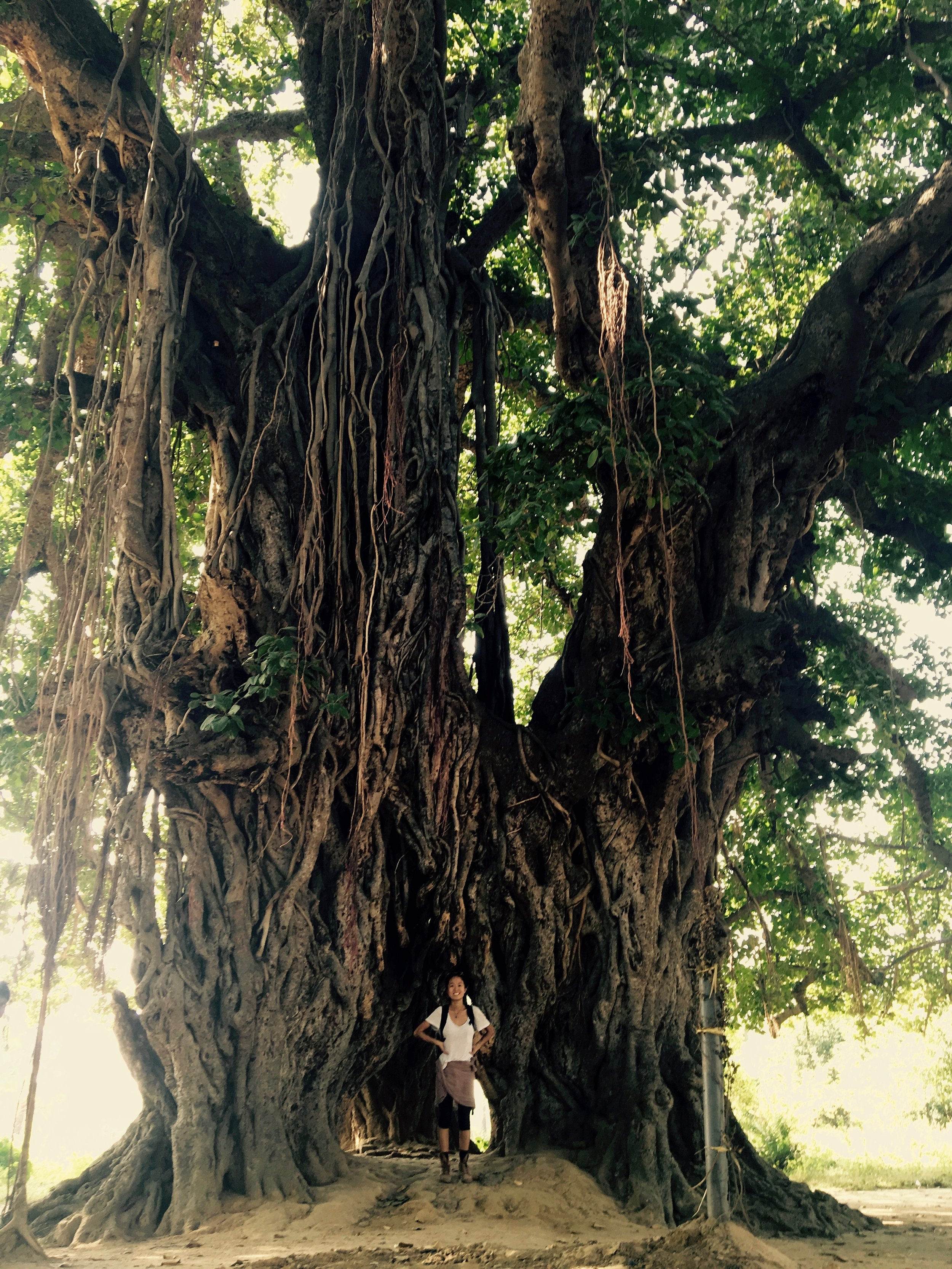 Me and the Banyan tree - 28 vs. 1000 years old. See those long skinny trunks surrounding the tree? Those are roots that have come from within the tree and sprouted back out and into the earth. Sustenance to keep the tree alive and running.