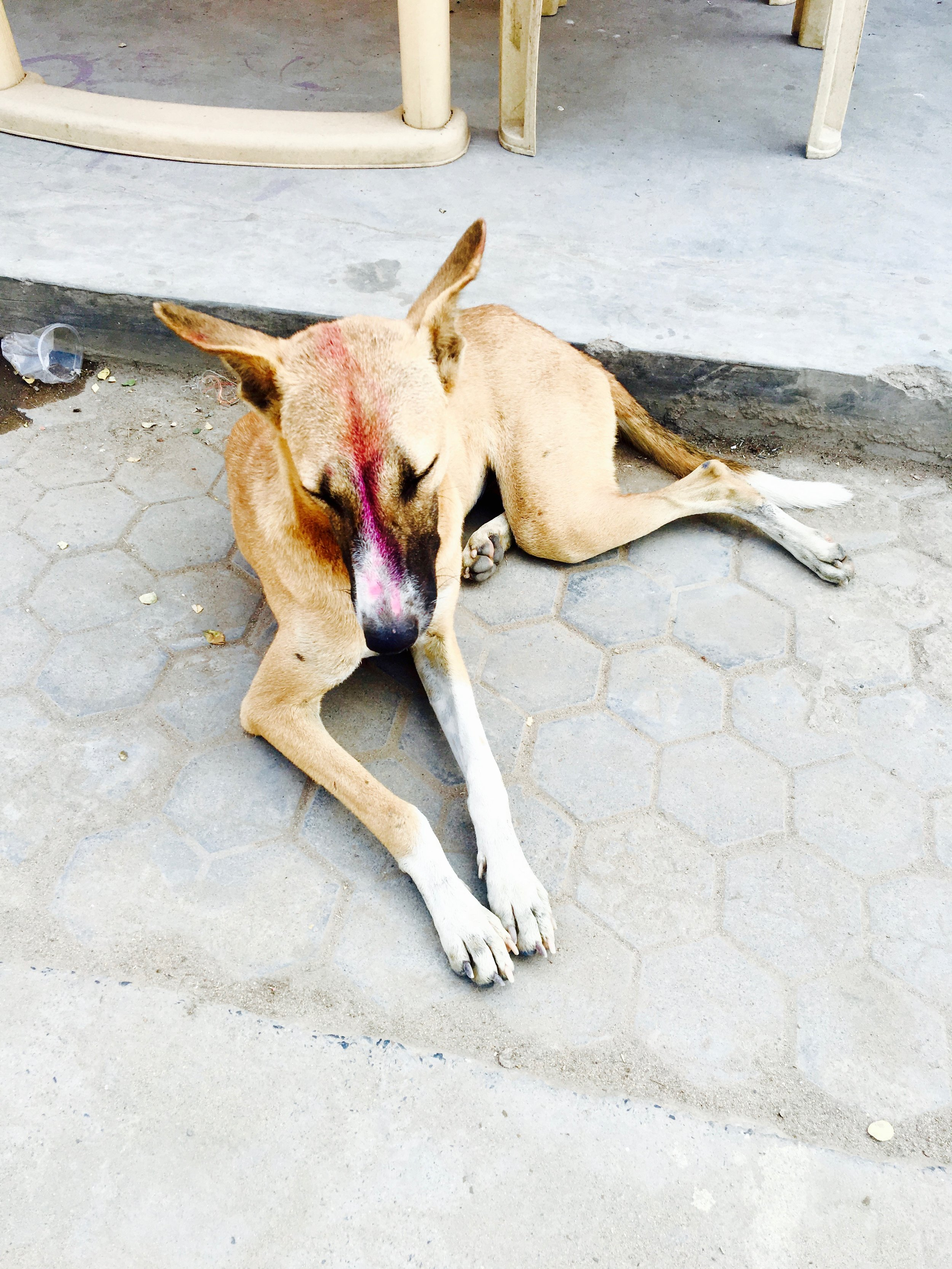 The spirituality in Bodh Gaya is turned up a notch, even with the dogs!