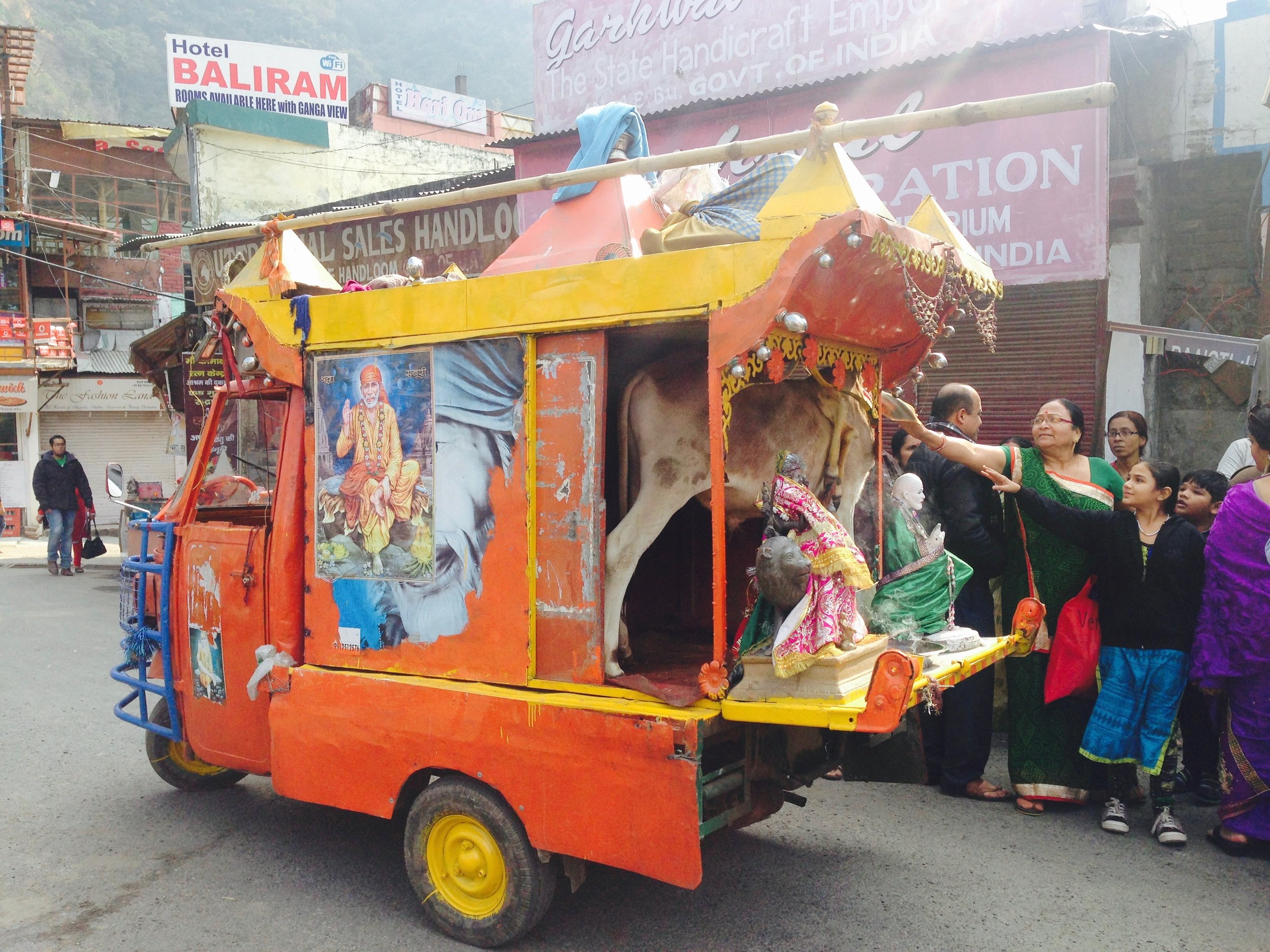 Christmas: an excuse for Indians to load up holy cows in trucks and make some money? It appears so.