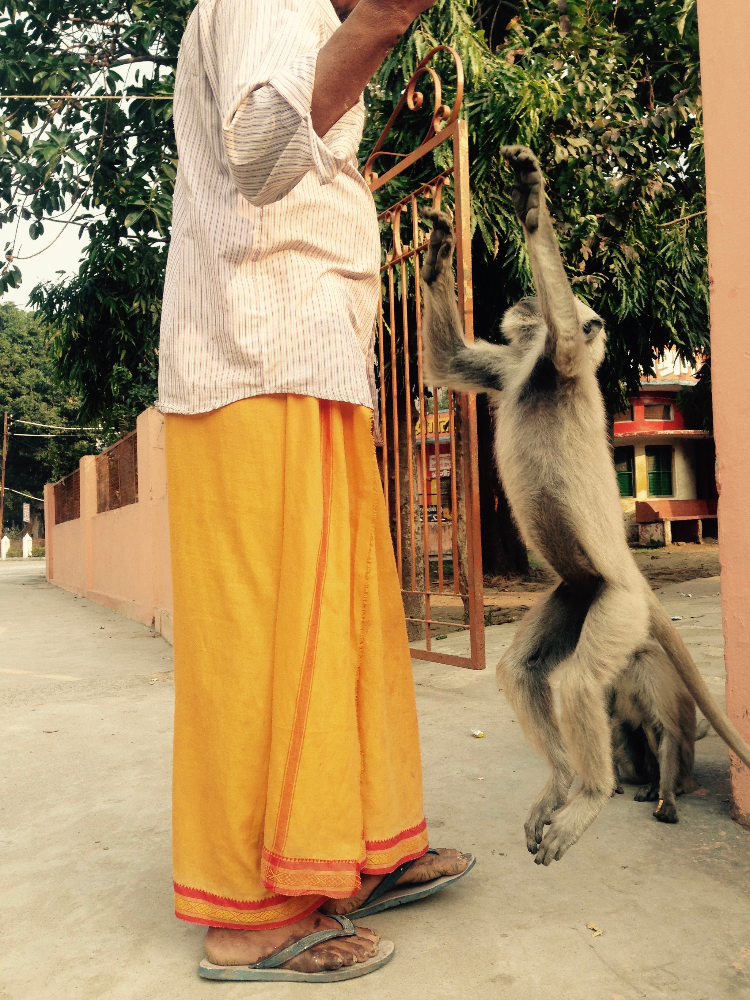 Ashram baba treating a languor to some biscuits. Naturally, I had to stop and watch.