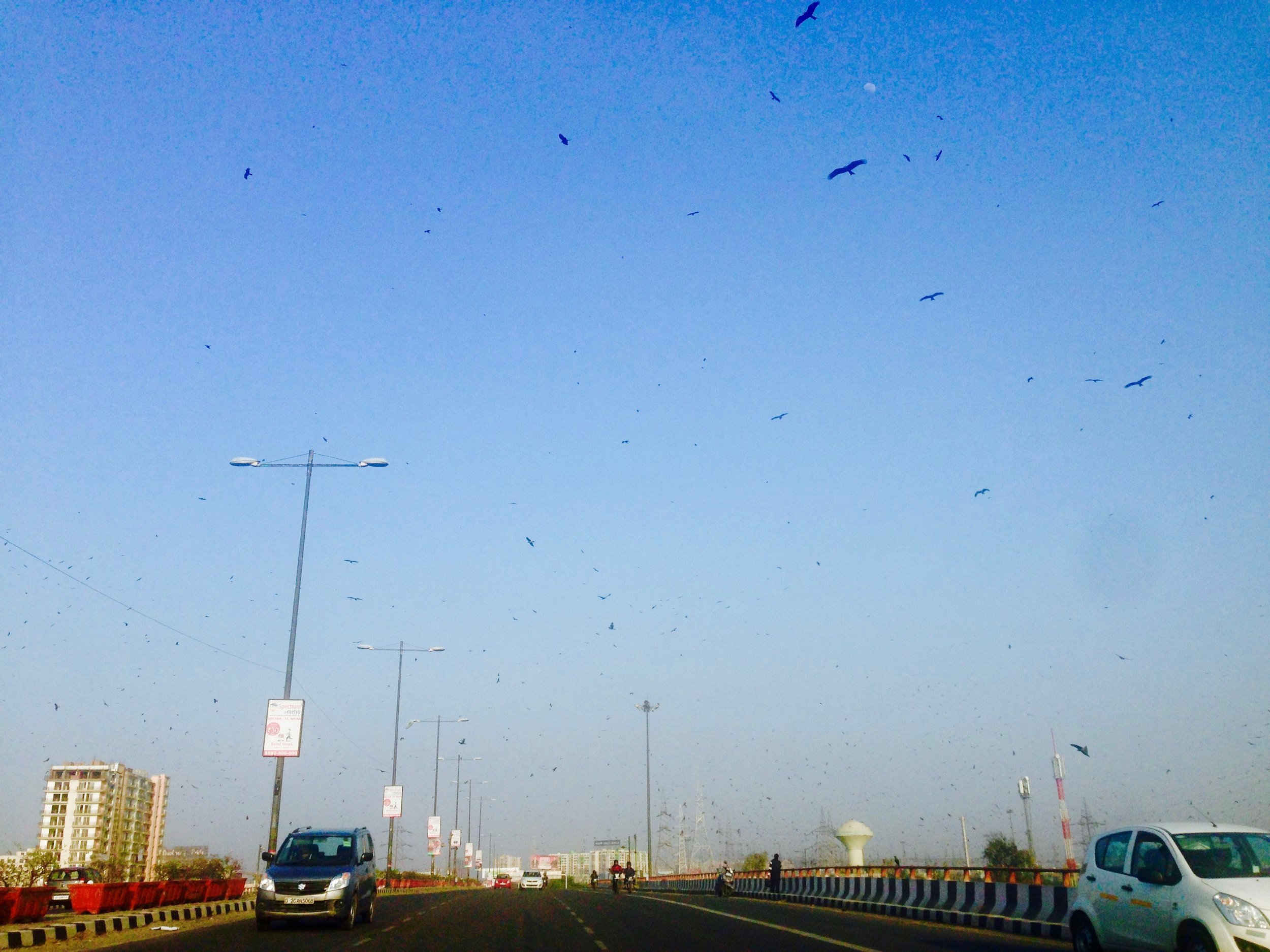 En route to the airport in Delhi, driving through a giant mass of birds (possible foreshadowing of what's to come in Bali?)