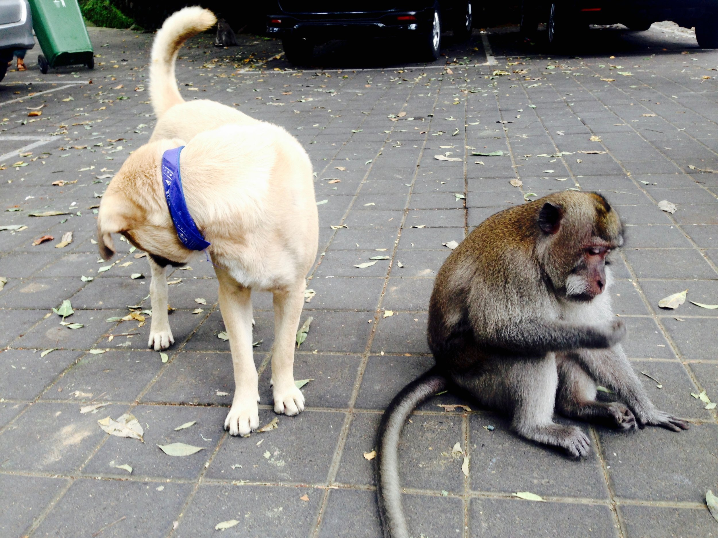 Walking past the Monkey Sanctuary and spotted a friendship forming...