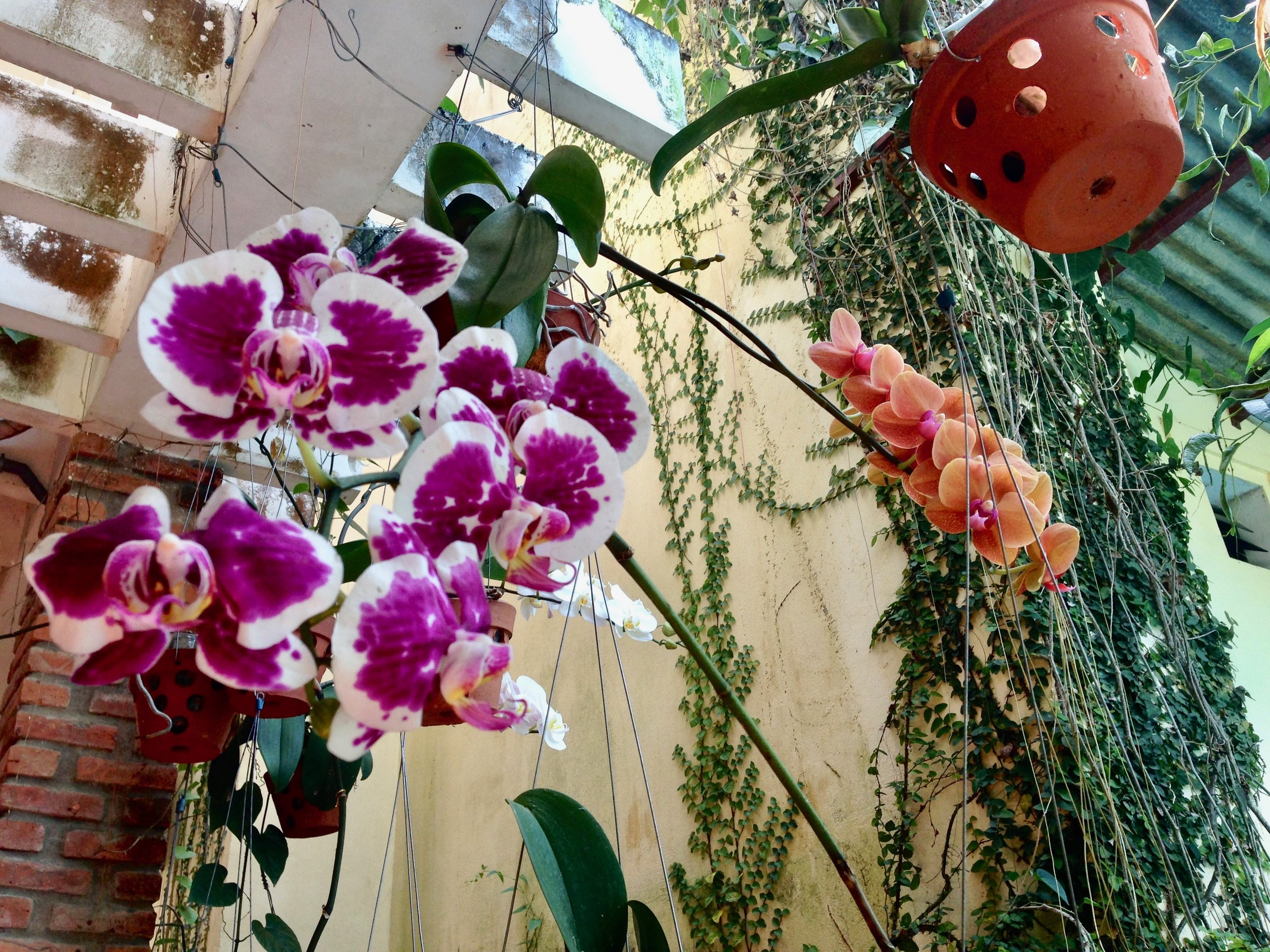 If you want to be showered in the most beautiful orchids in Hoi An, go to Hoi An Orchid Garden Villa - they might even cook you a delicious FREE dinner just because they're lovely like that.
