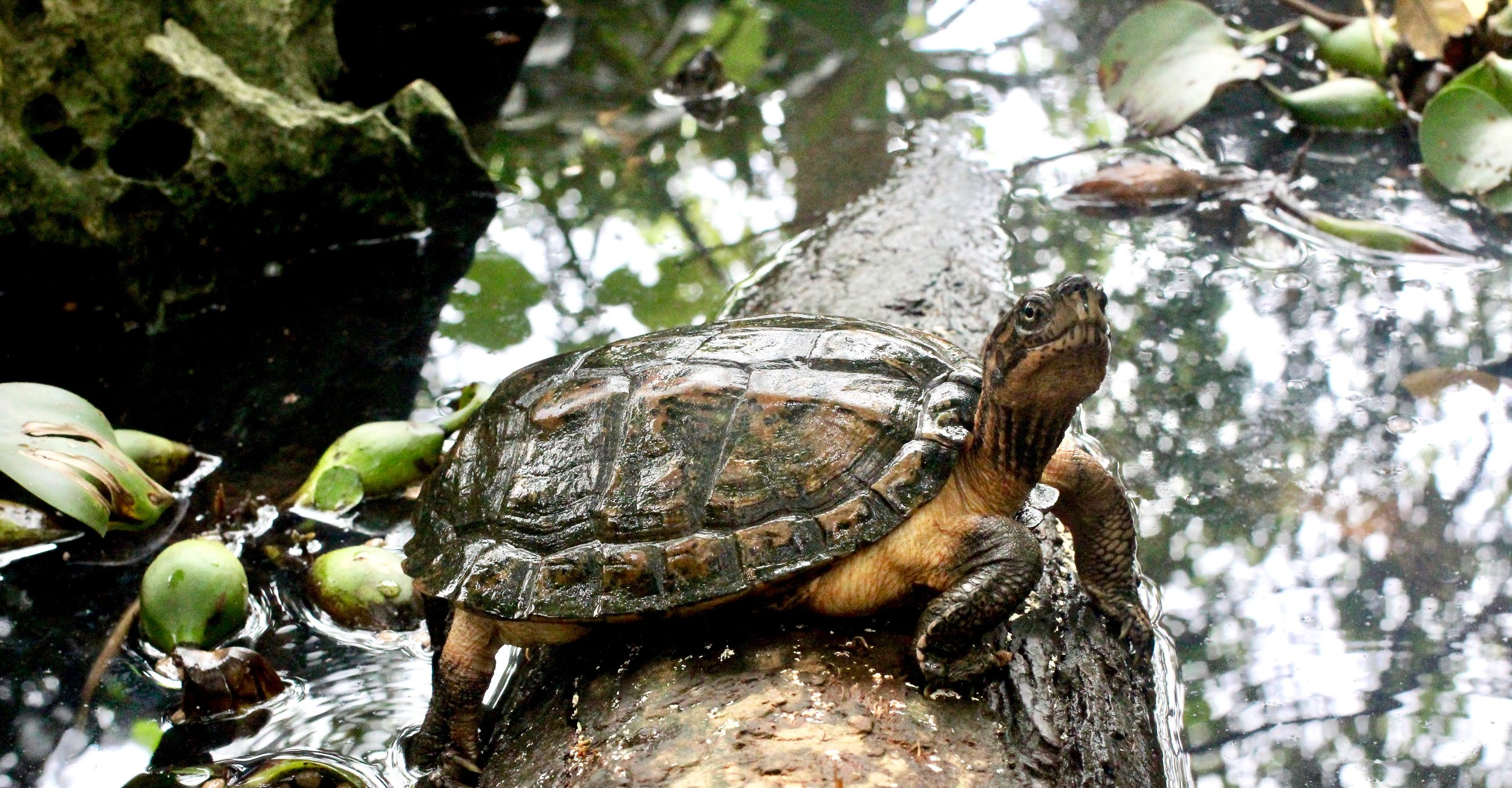Turtles have been around the block, we're talking 200 million years. Yeah, you heard right.