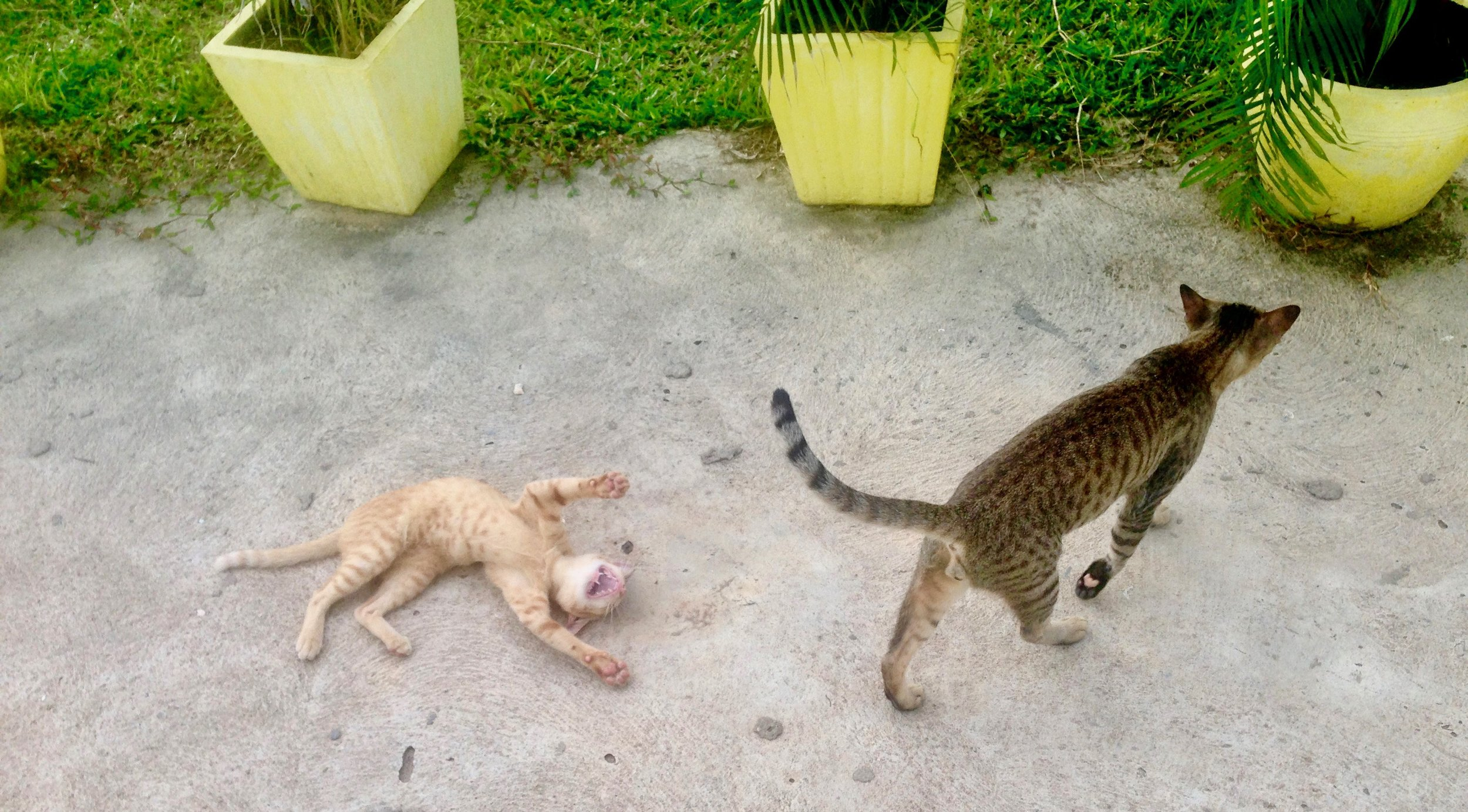 Crazy cool BOHO cats. They were either loving on you, or hunting