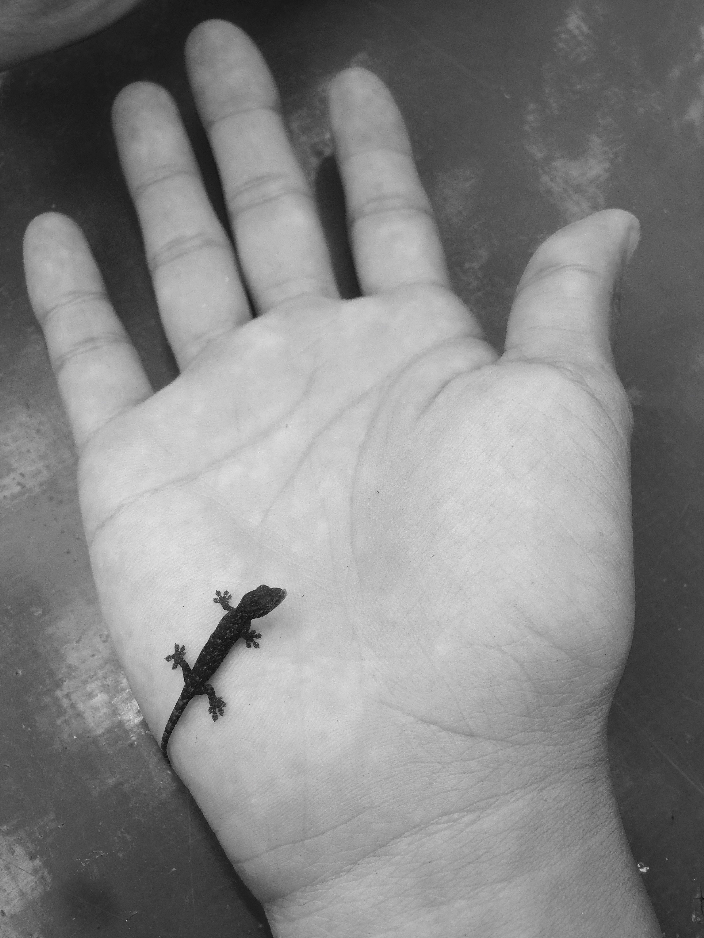 Hey there baby gecko!