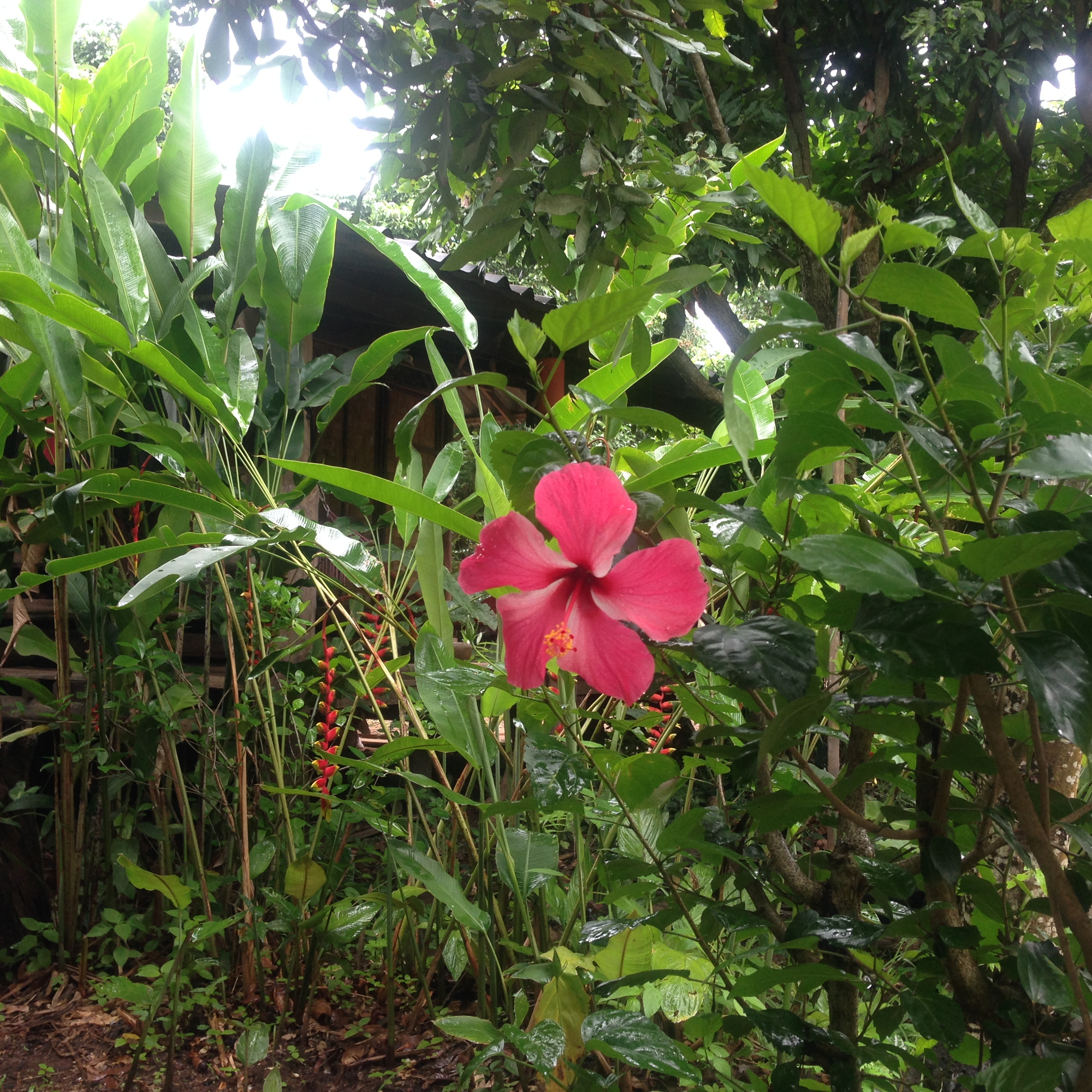 Pretty little thing at Pun Pun, a farm in Northern Thailand + neighbor to Panya Project