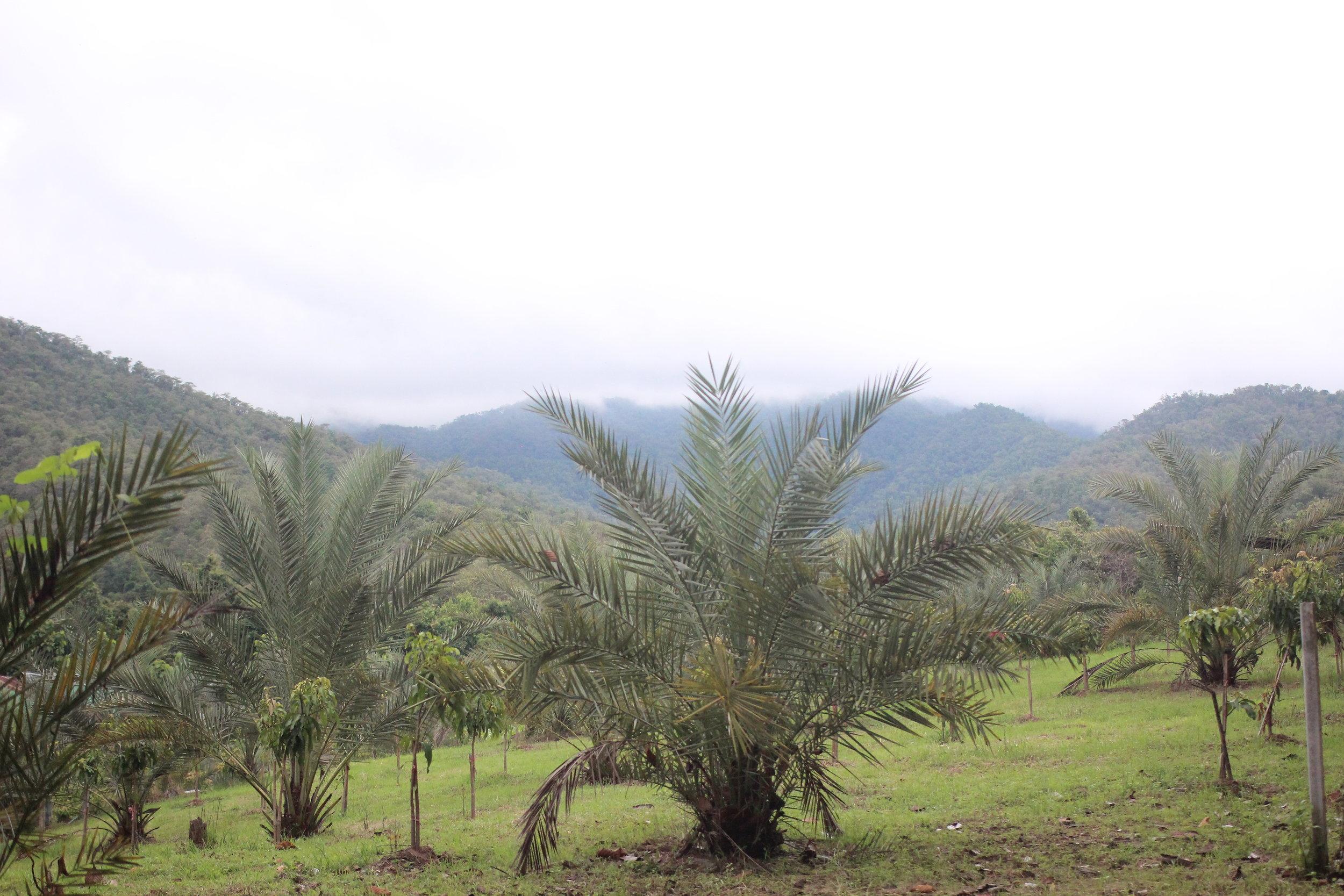 Panya's view of Si Lanna National Park