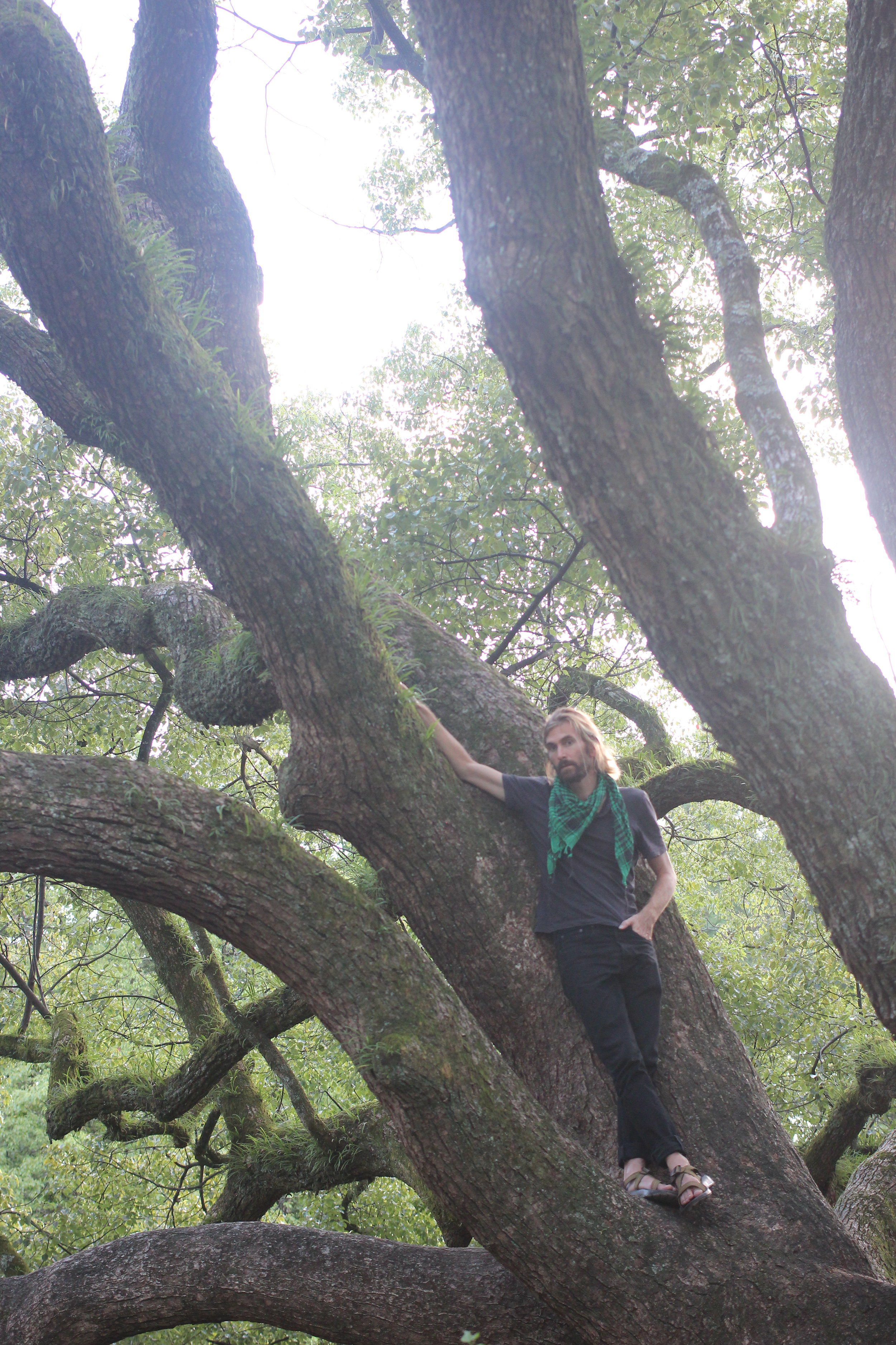Wylie in his element: in a tree.