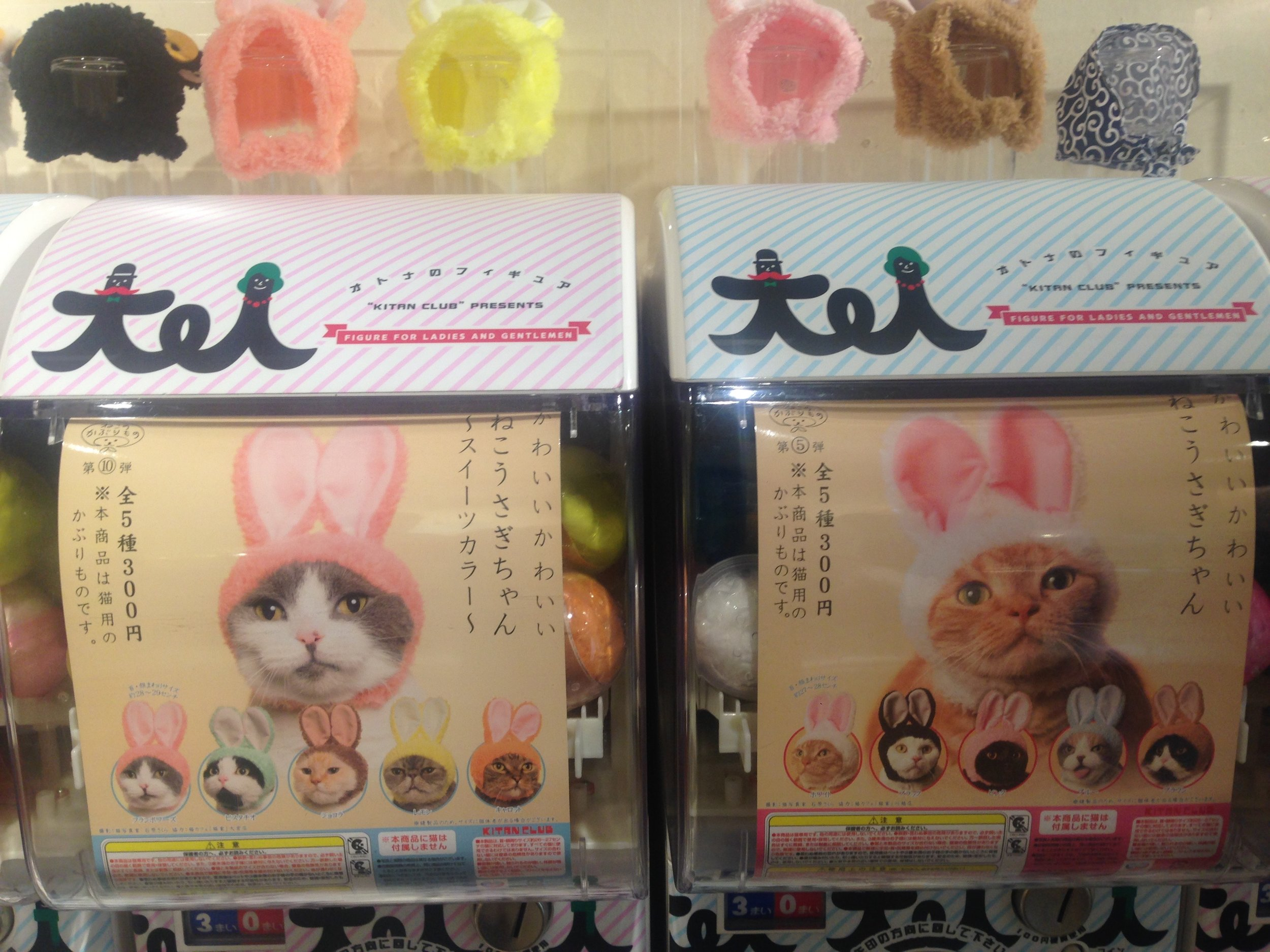 Guess there's a market for cats that wanna be bunnies