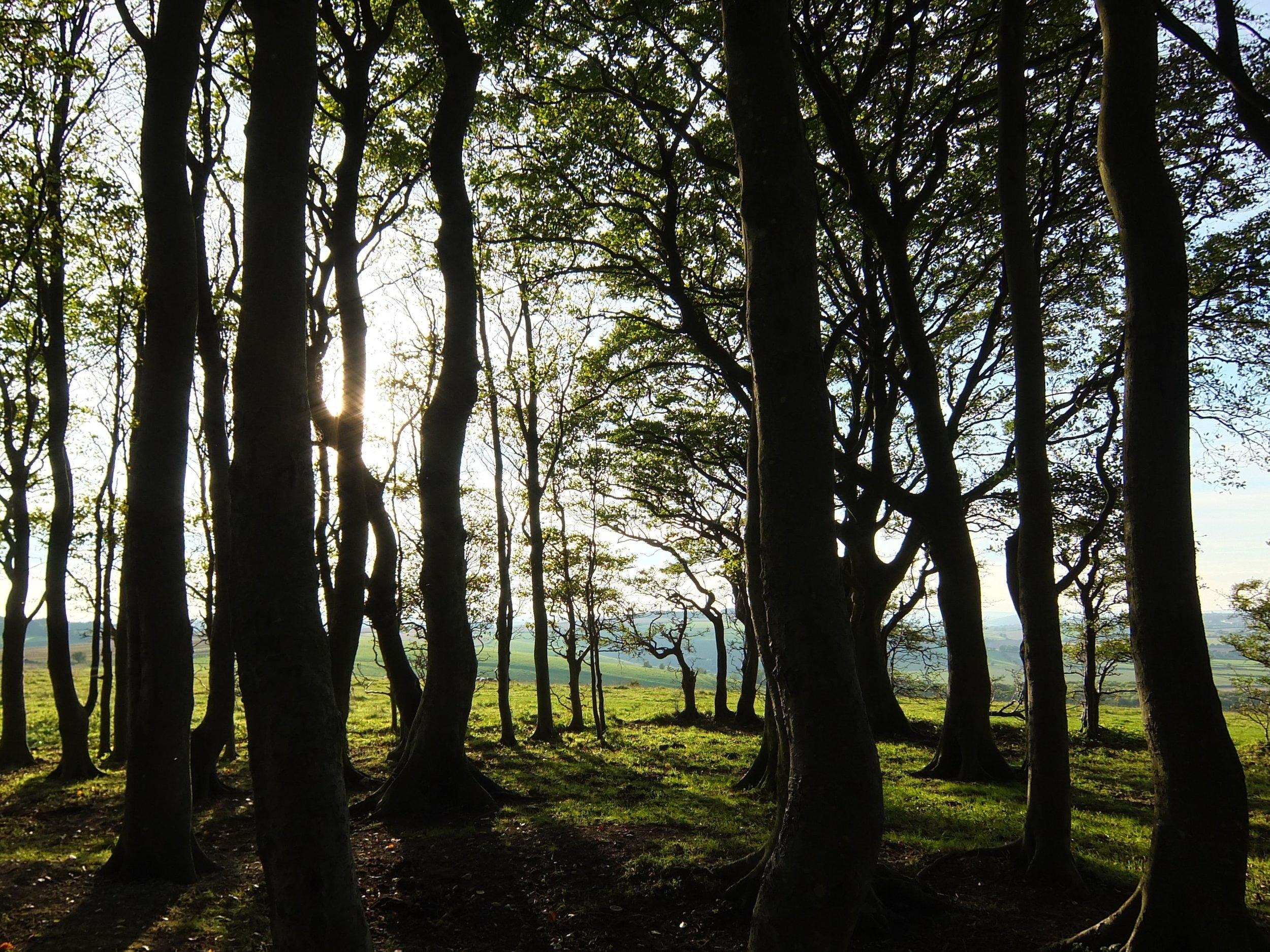 Wald, der Lebensspender dieser Erde (im nächsten Beitrag mehr zu diesem Thema)