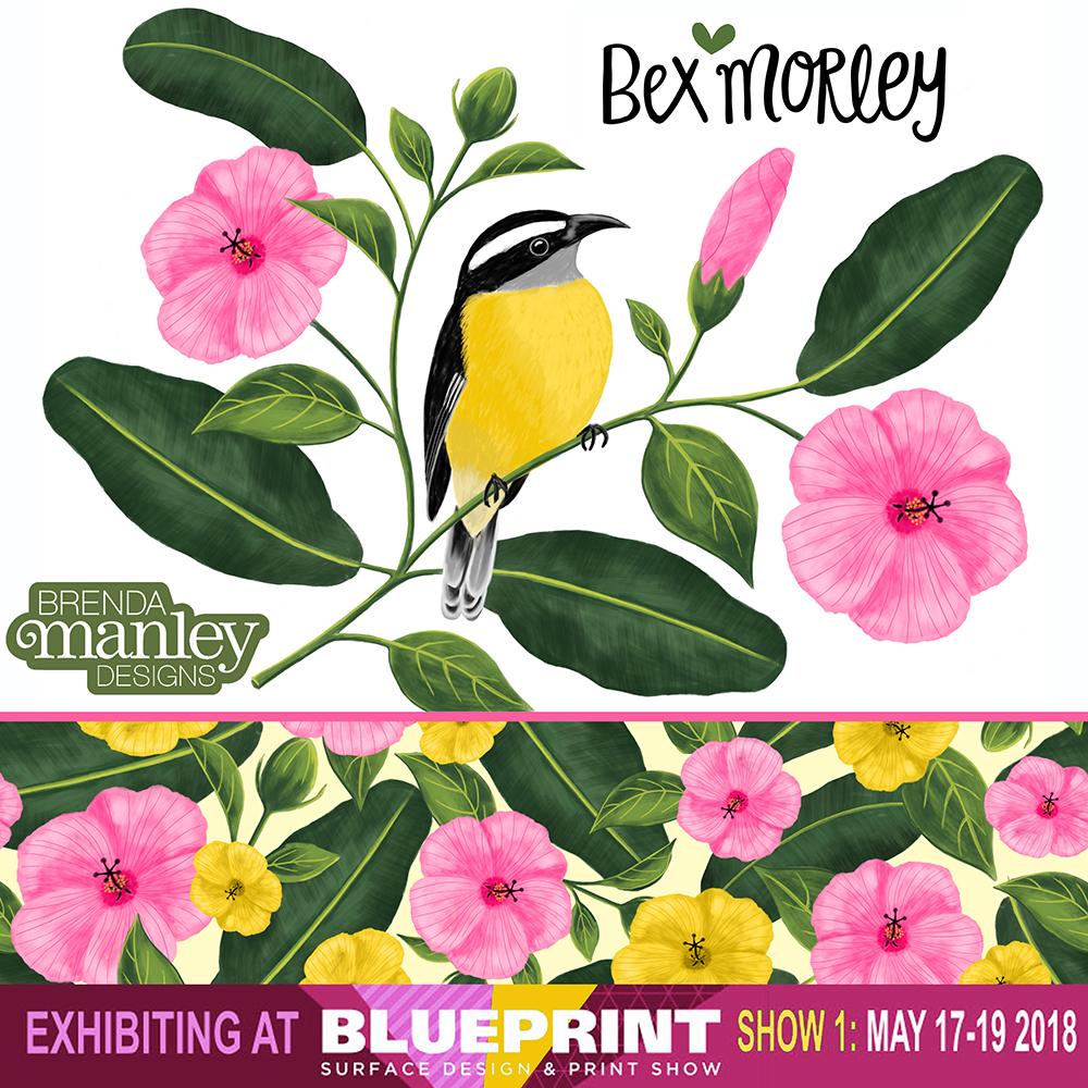 Blueprint Bananaquit.jpg