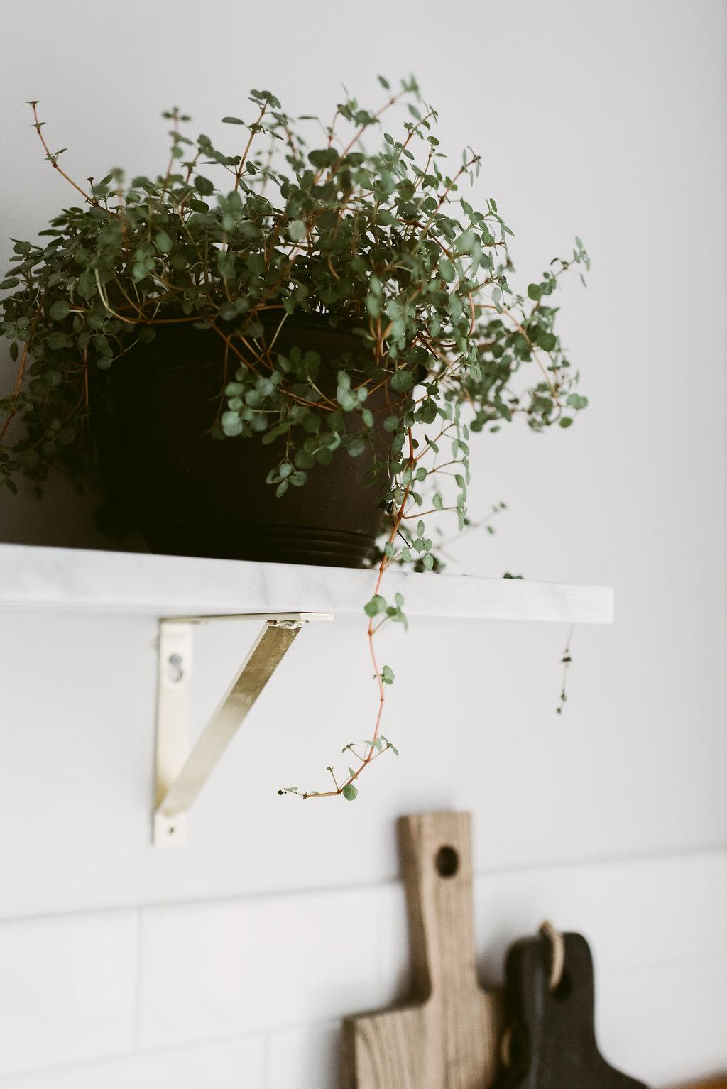 deboe-studio-interiors-plants-in-kitchen