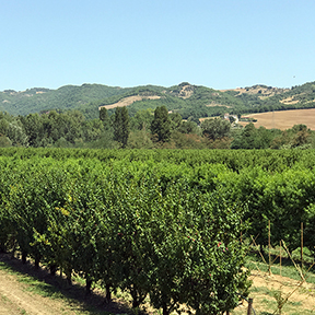 umbria-orchard.jpg