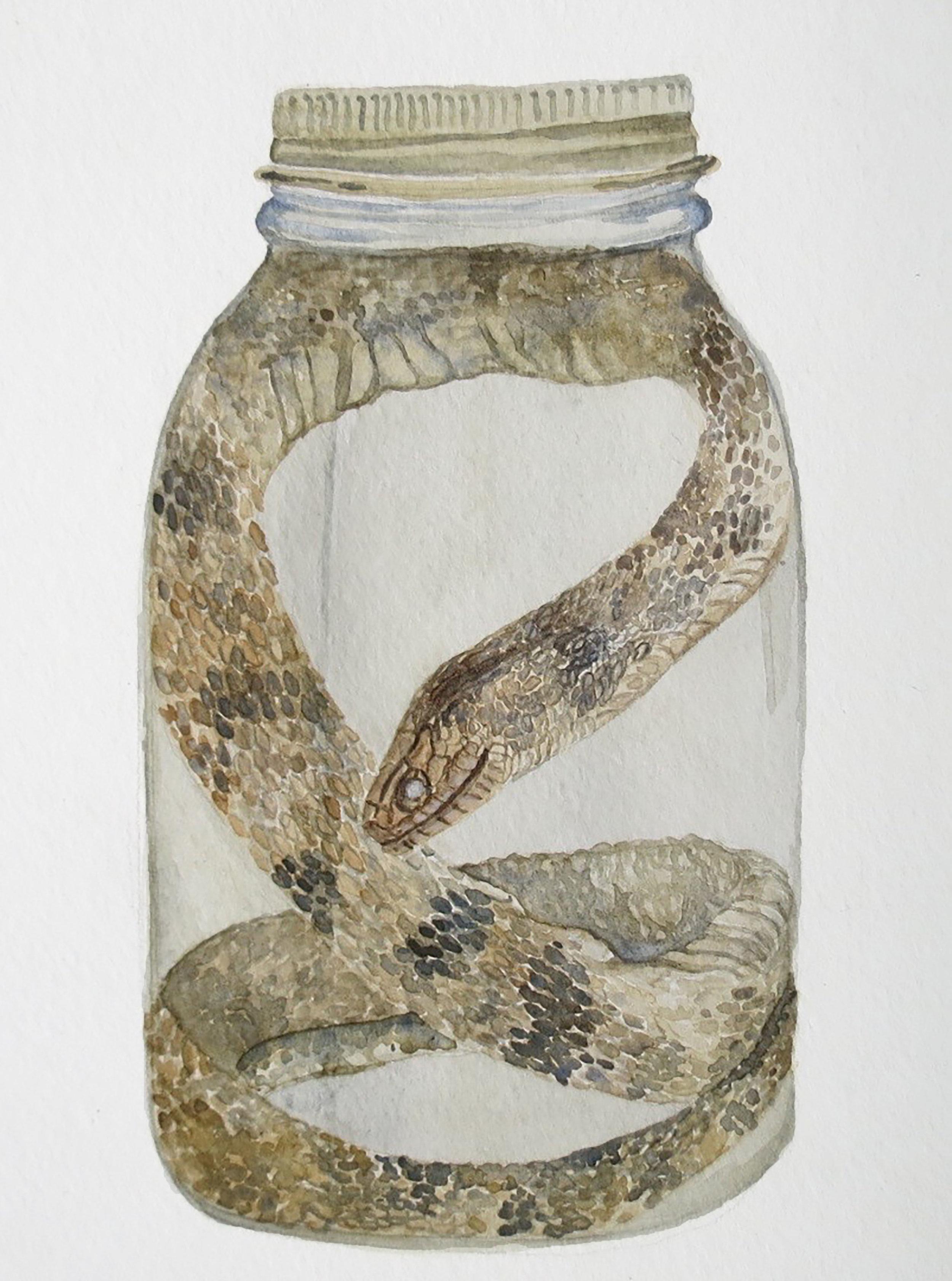 snake new.jpg
