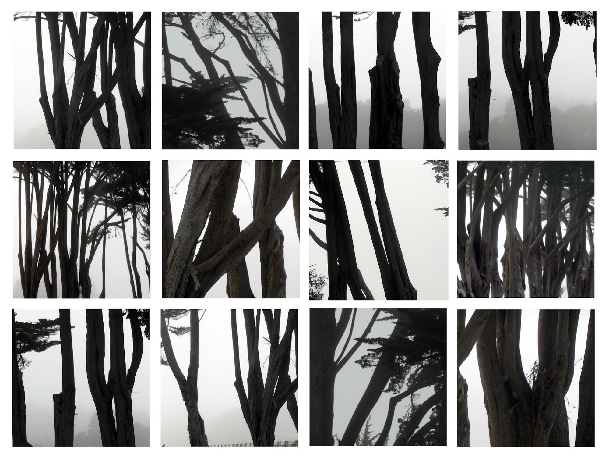From Coastal Trees Series