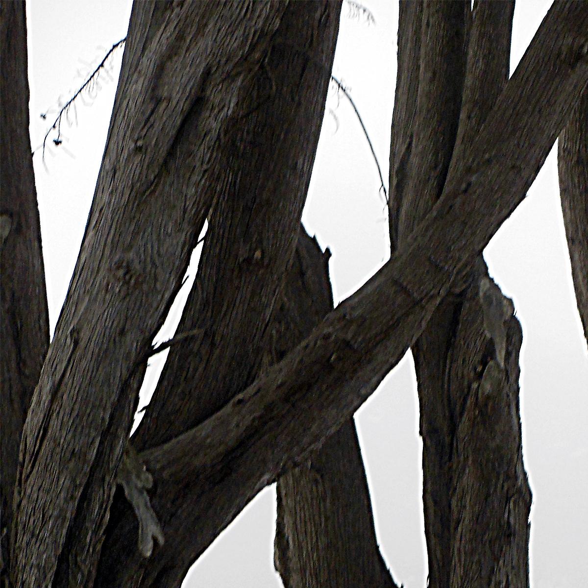 Coastal Trees 3