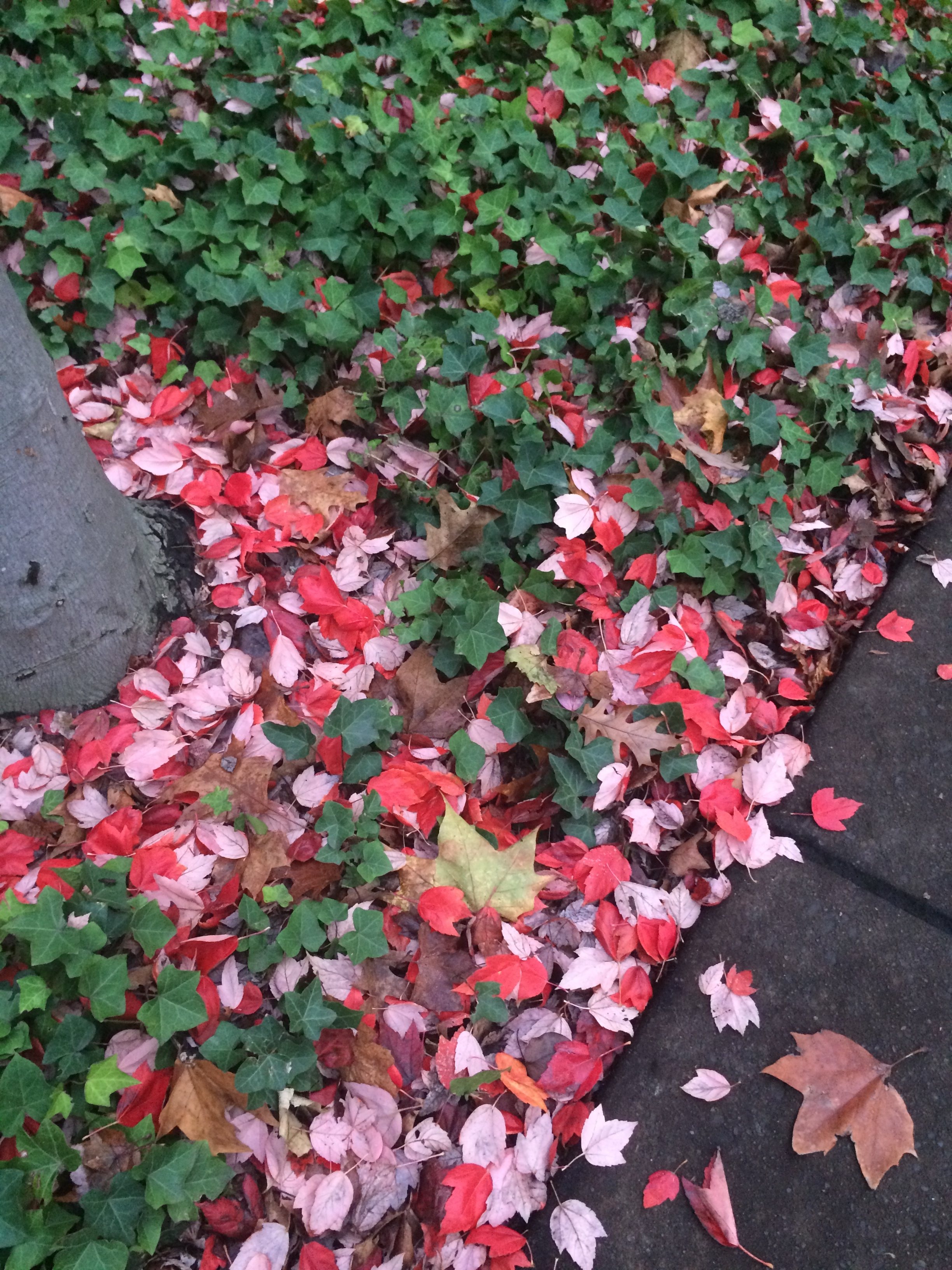 Pretty leaves in Eugene