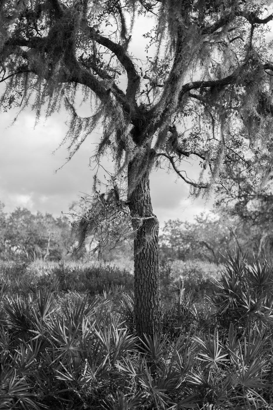 Forest-5.jpg