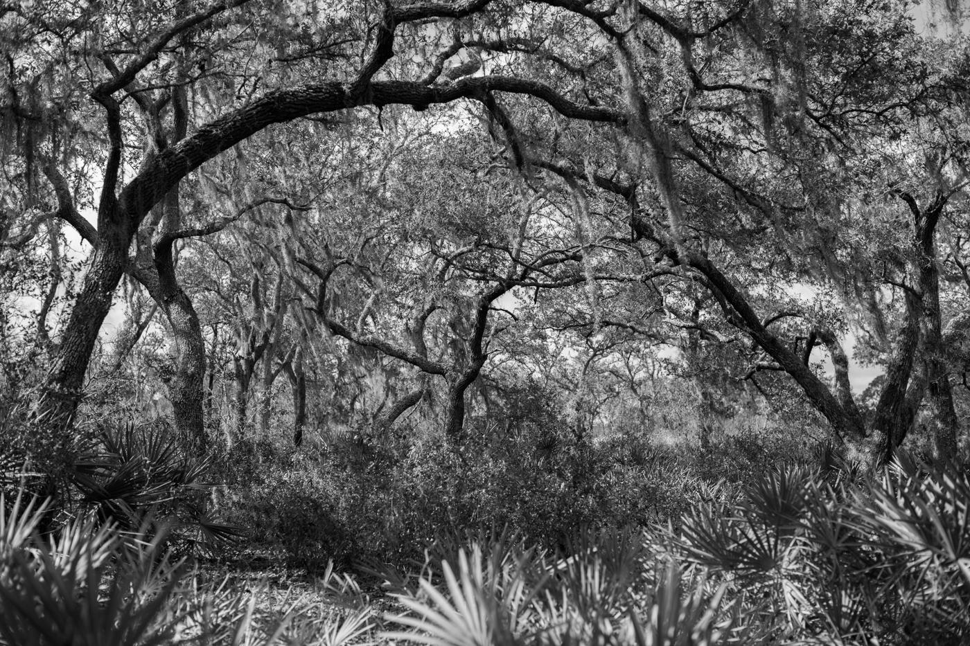 Forest-7.jpg