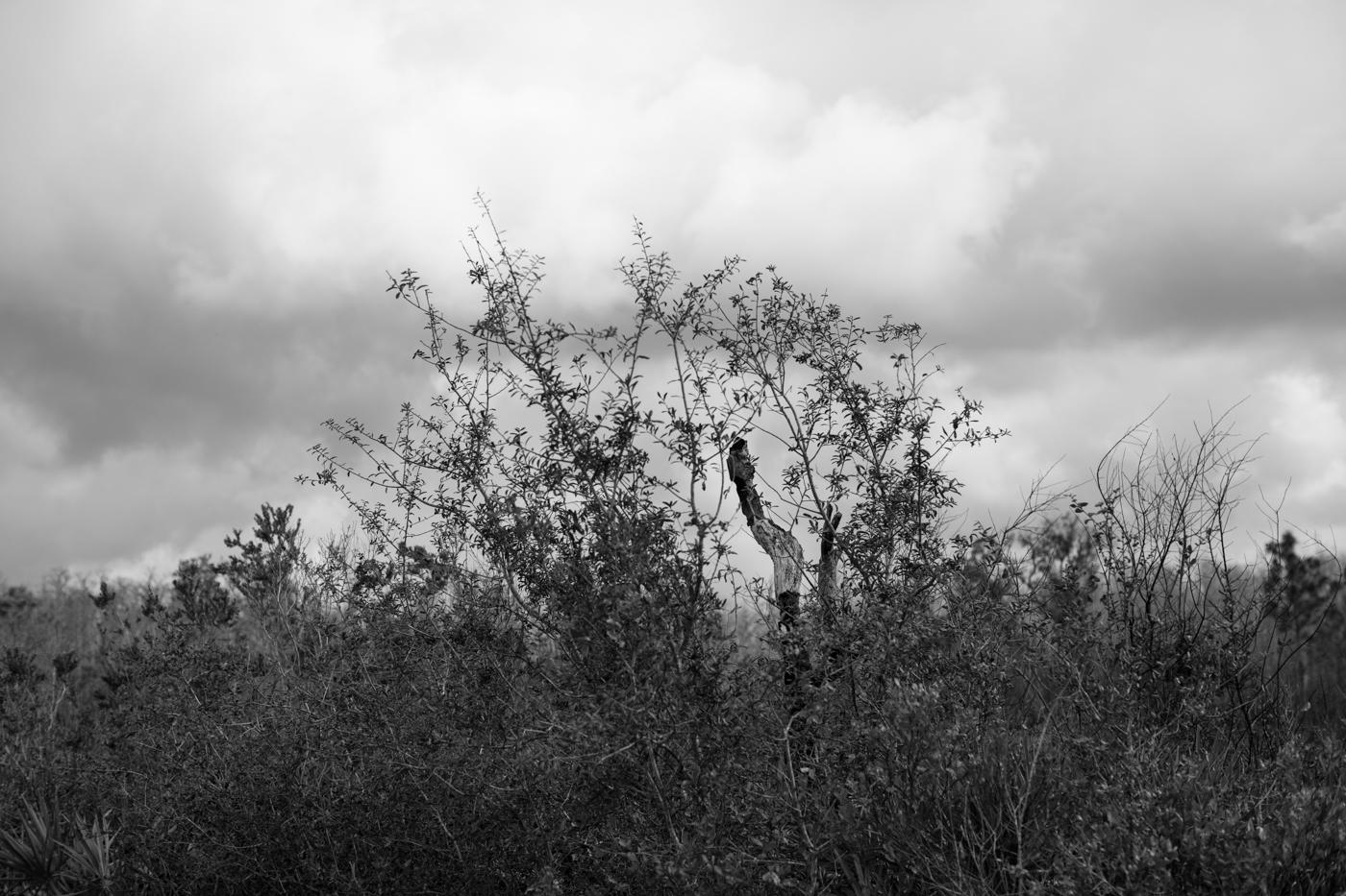 Forest-11.jpg