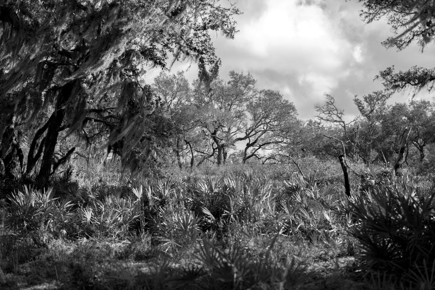 Forest-13.jpg