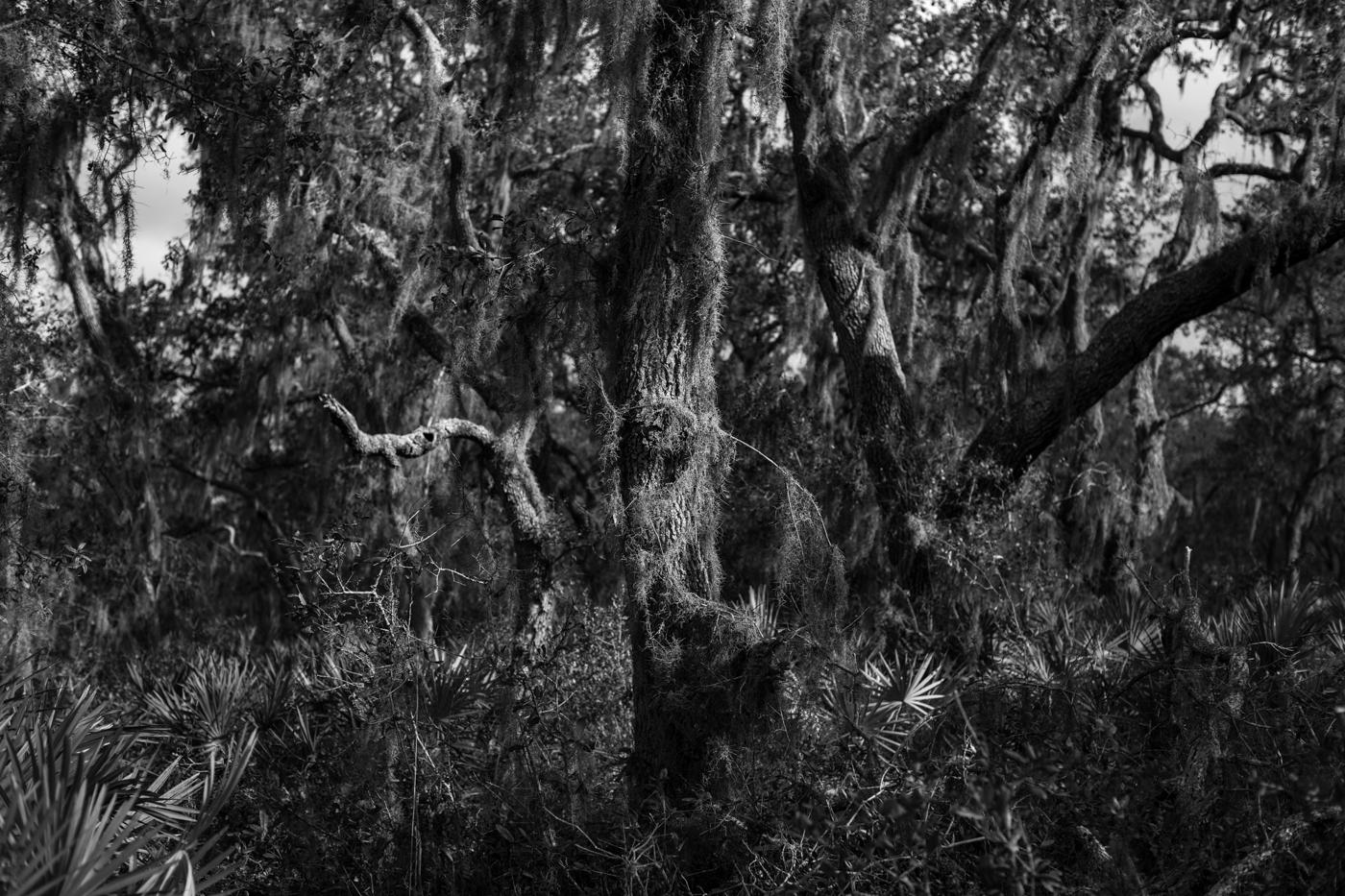 Forest-17.jpg