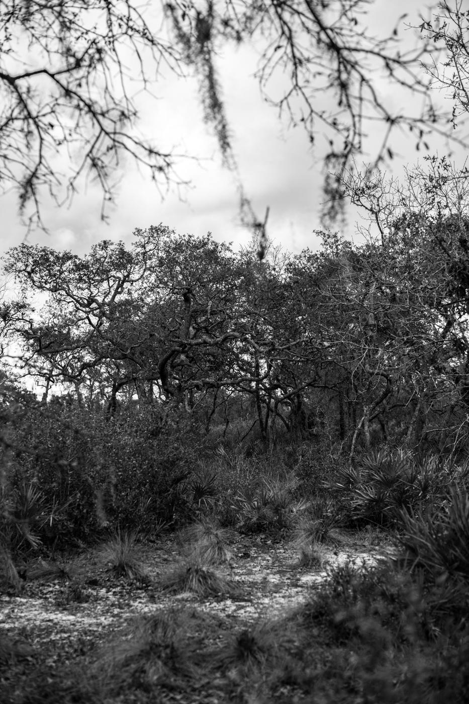 Forest-18.jpg