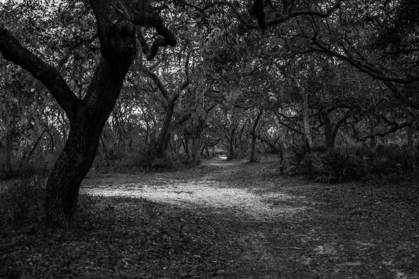 Forest-19.jpg